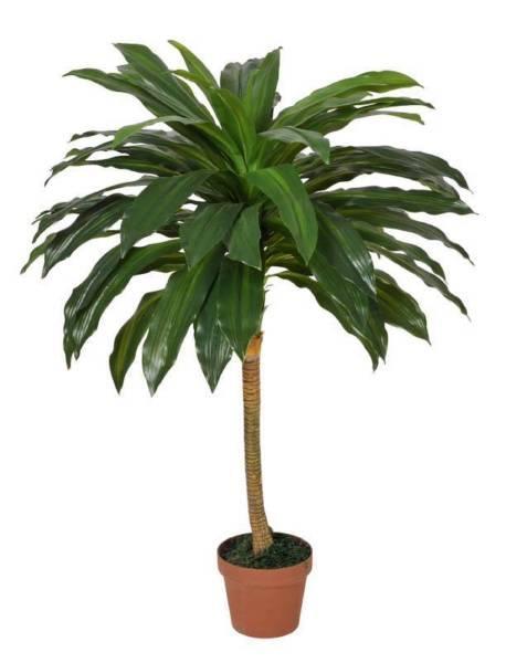 Dracaena Fragrans (Corn Plant) 100cm