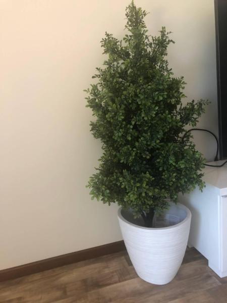 IKEA indoor plant & pot